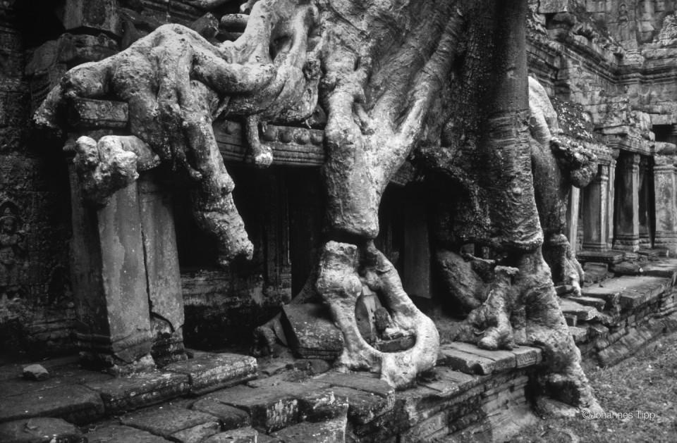 JT-Cambodia-Angkor-Preah-Khan-Ruins-Tree-2000-F216N00-N-DS.jpg