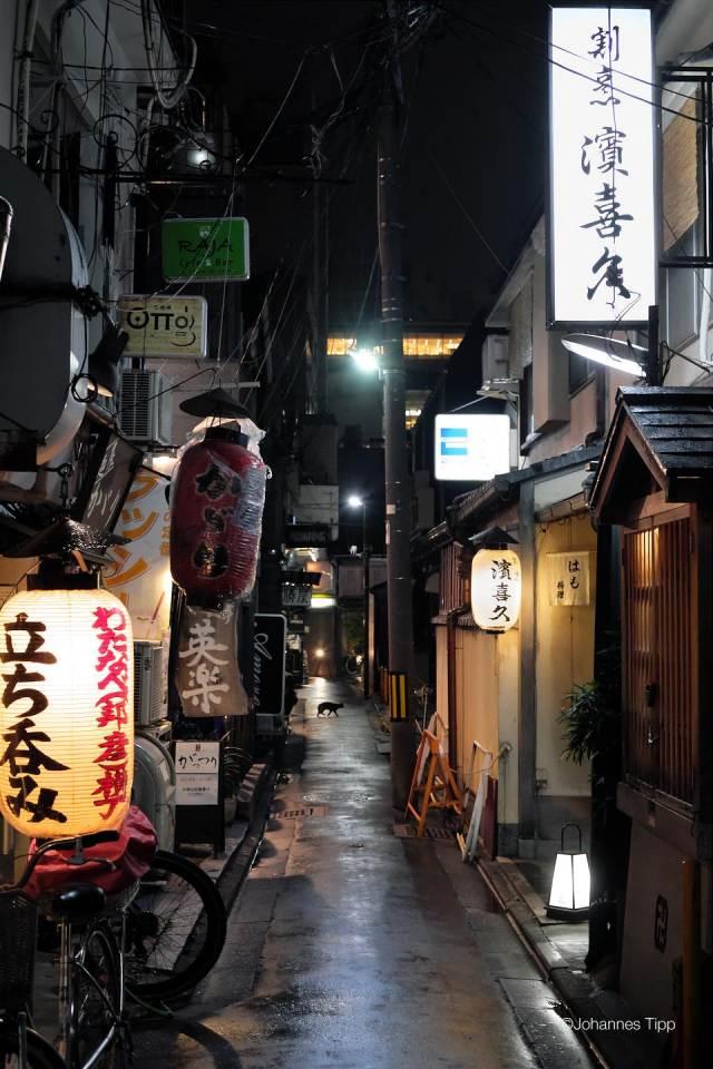 JT-Japan-Kyoto-Pontocho-Night-Alley-Cat-2019-3266-DS.JPG