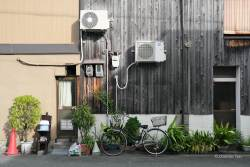 JT-Japan-Kyoto-Street-Bicycle-Pot-Plants-2019-0307-DS.JPG