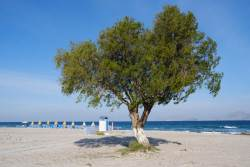 JT-Greece-Kos-Marmari-Beach-Tree-Windbreaks-2019-5265-DS.jpg