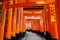 JT-Japan-Kyoto-Fushimi-Inari-Shrine-Torii-Gates-2019-0242-DS.jpg