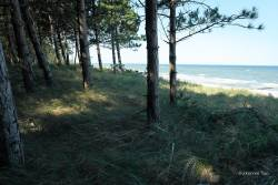 JT-Poland-Dabkowice-Trees-Beach-2018-0782-DS.jpg