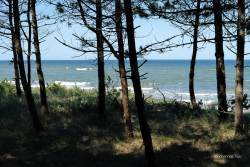 JT-Poland-Dabkowice-Trees-Beach-2018-0825-DS.jpg