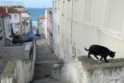 JT-Portugal-Sesimbra-Cat-on-Wall-2018-3682-DS.jpg